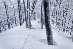 Pista del esquí en bosque nevoso misterioso Imagen de archivo