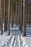 Pista del esquí en un bosque del pino Foto de archivo libre de regalías