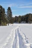 Pista del esquí a través del bosque en invierno Fotos de archivo