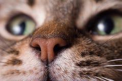 Pista del gato imagenes de archivo