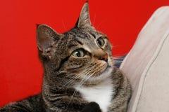 Pista del gato fotos de archivo