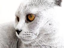 Pista del gato Fotografía de archivo