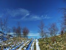 Pista del invierno Imágenes de archivo libres de regalías