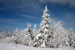 Pista del invierno y árboles nevosos Imágenes de archivo libres de regalías