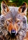 Pista del lobo Fotografía de archivo