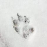 Pista del perro, huella en nieve Imagen de archivo libre de regalías
