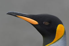 Pista del pingüino Foto de archivo