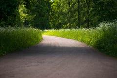 Pista del suolo forestale Molta pianta Fotografia Stock