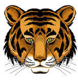 Pista del tigre stock de ilustración