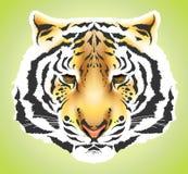 Pista del tigre - alta calidad Imagen de archivo libre de regalías
