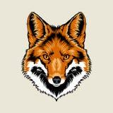 Pista del zorro rojo Imagen de archivo libre de regalías