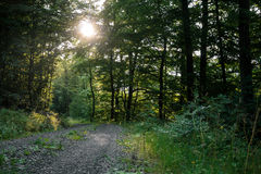 Pista della foresta Fotografie Stock