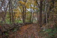 Pista della foresta di autunno immagini stock libere da diritti