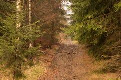 Pista della foresta nelle montagne Fotografia Stock
