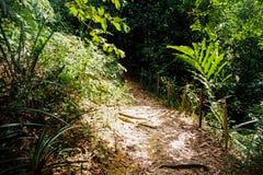 Pista della giungla Fotografie Stock