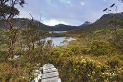 Pista della Tasmania allo stagno di vombato Fotografia Stock Libera da Diritti