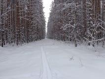 Pista dello sci nella foresta di inverno Fotografie Stock