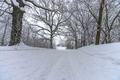 Pista dello sci su neve risieduta nella foresta fotografie stock libere da diritti