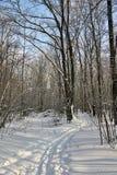 Pista dello sci su una foresta nevosa Immagine Stock Libera da Diritti