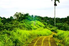Pista di camminata della piantagione verde fertile nella giungla tropicale della foresta pluviale immagine stock