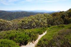 Pista di camminata di Mt Buller Fotografia Stock