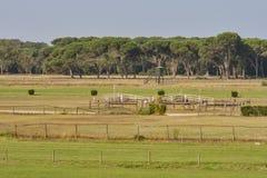 Pista di corsa di cavalli Fotografia Stock