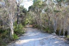Pista di Sandy attraverso gli alberi Australia ad ovest di melaleuca Fotografie Stock