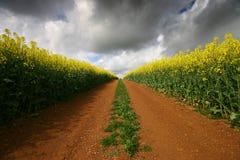 Pista di sporcizia attraverso terreno rosso ed il raccolto giallo Immagini Stock