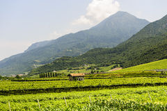 Pista do ciclo do vale de Adige fotografia de stock