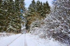 Pista do inverno entre árvores geadas na manhã Imagem de Stock