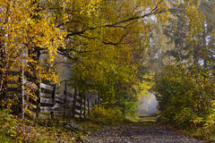 Pista do país com as árvores de folhas mortas em cores do outono imagem de stock royalty free