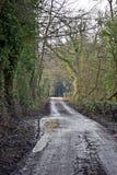 Pista do país no coração da linha lateral de Kent Country ambos os lados com árvores foto de stock royalty free