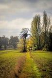 Pista do país no inverno Fotografia de Stock Royalty Free