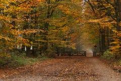 Pista e porta em madeiras coloridas do outono Fotografia de Stock Royalty Free