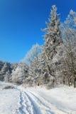 Pista en el borde de un bosque del invierno Foto de archivo libre de regalías