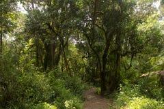 Pista en Kilimanjaro en el whisky de la ruta de Machame imagen de archivo