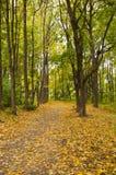 Pista en parque del otoño Imagenes de archivo