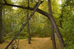 Pista en parque del otoño Imagen de archivo