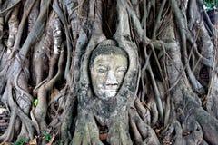 Pista en raíces del árbol de banyan, ayuthaya de Buddha Imagen de archivo libre de regalías
