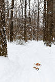 Pista in foresta nevosa Immagini Stock Libere da Diritti