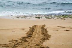 Pista hawaiana de la tortuga de mar verde imagen de archivo libre de regalías