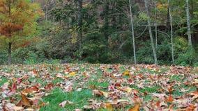 Pista a lo largo del bosque del otoño almacen de video