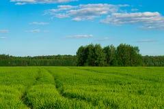 Pista nel campo contro il cielo blu Fotografia Stock