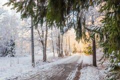 Pista nel parco di inverno e ramo verde su priorità alta Immagine Stock Libera da Diritti