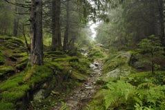 Pista nella foresta del wilde immagini stock