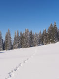 Pista nella neve che conduce agli abeti congelati Immagine Stock