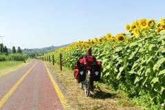 Pista para bicicletas e girassóis em Toscânia imagem de stock