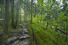Pista que camina alpina Imagen de archivo libre de regalías