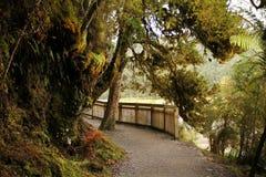 Pista que camina de la selva tropical y del lago en la isla del sur, Nueva Zelanda Imagen de archivo