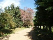 Pista que camina polvorienta a través del bosque Foto de archivo